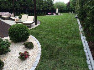 Iglaki i rośliny półzimozielone na rabatach w ogrodzie nowoczesnym
