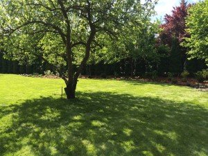 modernizacja starego ogrodu
