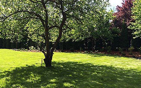 modernizacja-starego-ogrodu